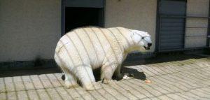 Фото Пензенского зоопарка