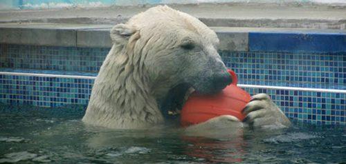 Фото пресс-службы Пензенского зоопарка