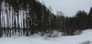 Фото министерства лесного охотничьего хозяйства и природопользования Пензенской области
