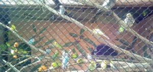 Фото Пензеского зоопарка