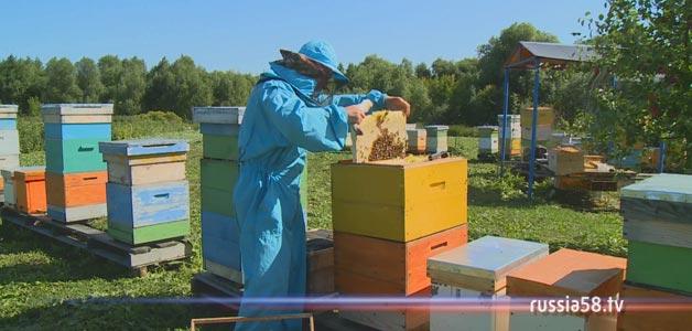 был пчеловоды амурской области фото почему мне