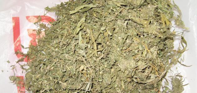 Где купить марихуану пенза перелив конопли