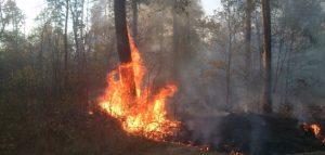 Фото с сайта Министерство лесного, охотничьего хозяйства и природопользования Пензенской области