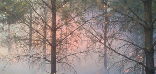 Фото с сайта министерства лесного, охотничьего хозяйства и природопользования Пензенской области