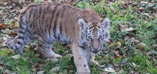 Фото из аккаунтов социальных сетей пензенского зоопарка