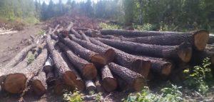 Фото министерсмтва лесногО, охотничьего хозяйства и природопользования Пензенской области