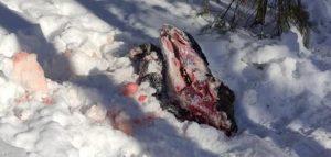 Фото министерства лесного, охотничьего хояйства и природопользования Пензенской области