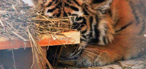 Фото Белгородского зоопарка