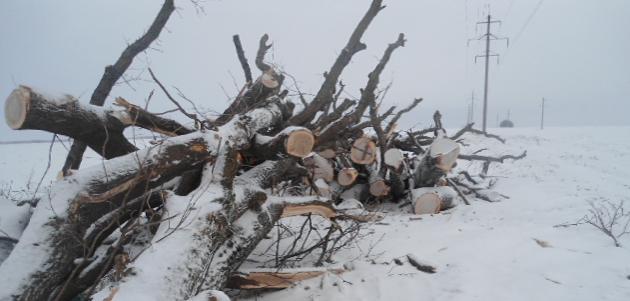 Фото управления Россельхознадзора по Пензенской области