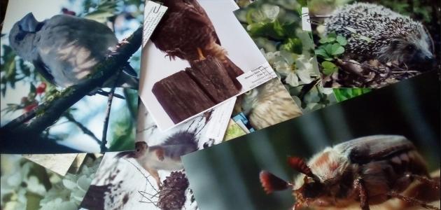 Фото заповедника «Приволжская лесостепь»