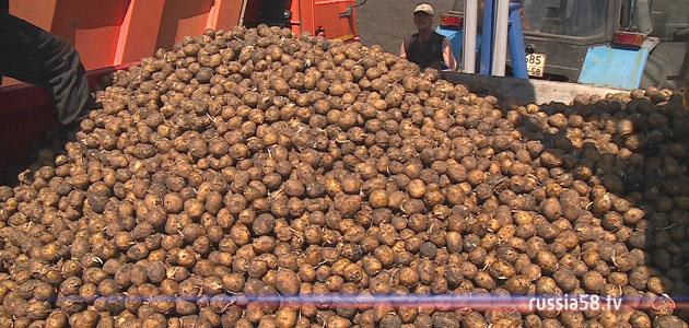 Пензенский картофель