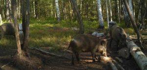 Фото министерства лесного ,охотничьего хозяйства и природопользования Пензенской области