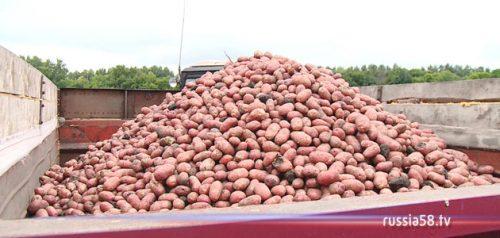 Заготовка картофеля
