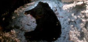 Фото министерства лесного, охотничьего хозяйсвта и природопользования Пензенской области