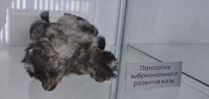 Музей патологической анатомии