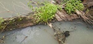 Мутная вода в реке. Фото жителей села Старая Каменка
