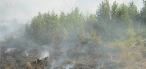 Фото пресс-службы ГУ МЧС России по Пензенской области