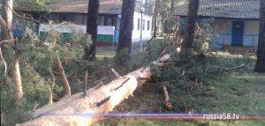 Поваленные сосны в лагере «Белка»