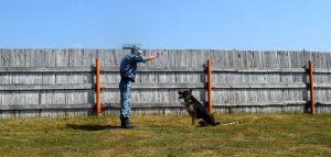 Кинолог с собакой. Фото пресс-службы УФСИН РФ по Пензенской области